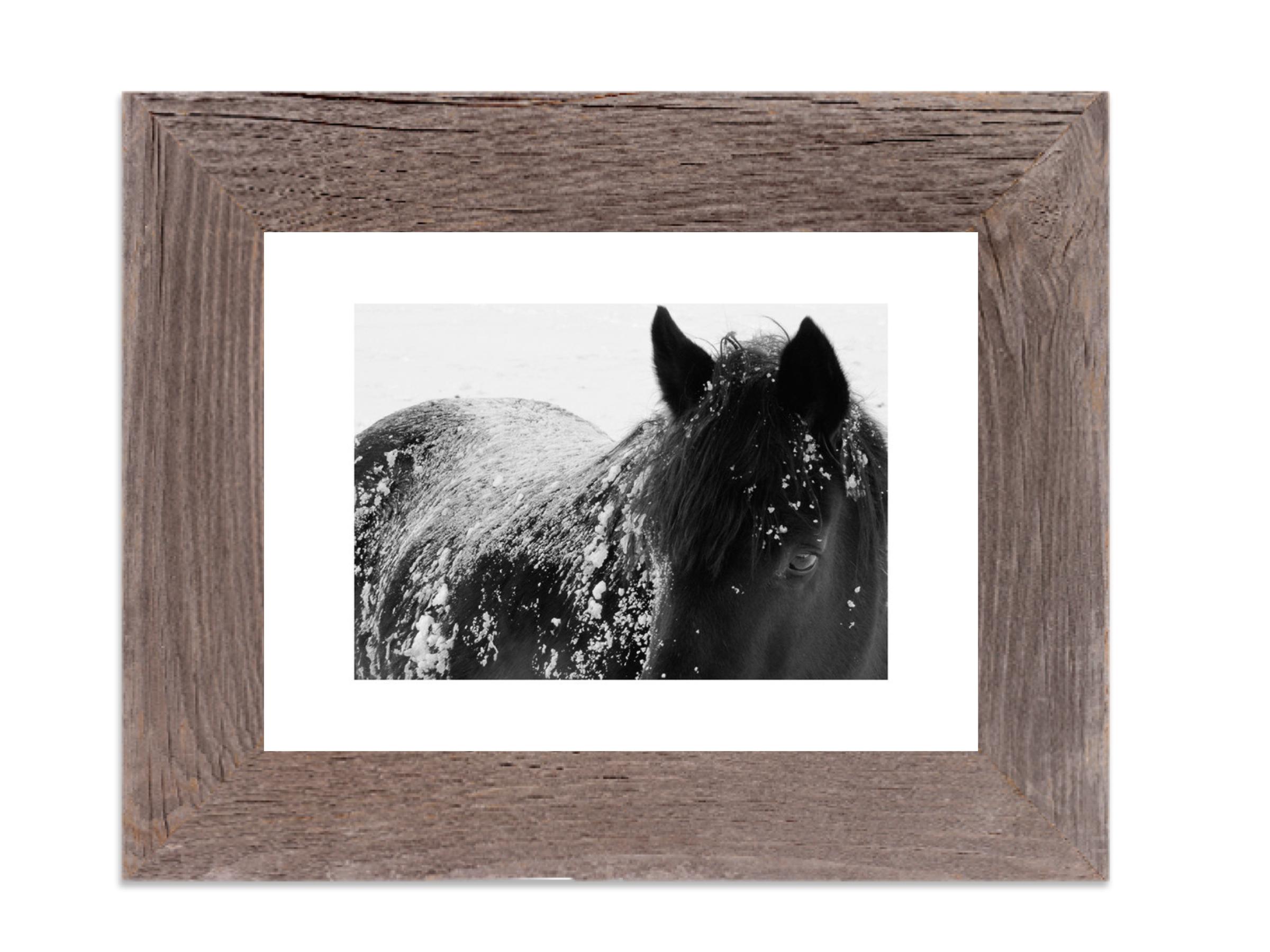 Horse Prints & Horse Art